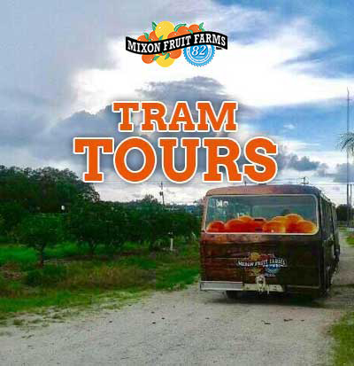 Orange Blossom Tram